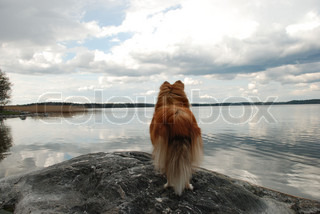 a dog that looks out over the sea