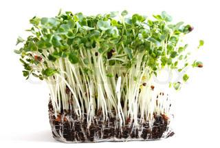 Billede af 'karse, plant, plante'