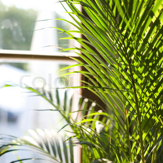 Billede af 'Plant, glas glas vindue, dekorationer'