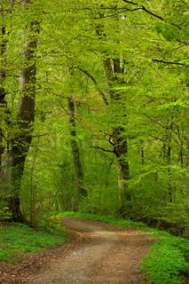 Billede af 'foråret, danmark, landskaber'