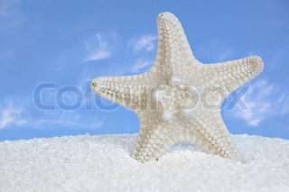 White Starfish And Sand With Blue Sky and Clouds In Background