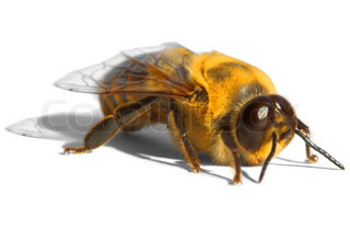 hell gelb Biene ~ Drohne
