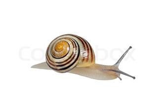Billede af 'sneglen, dyr, den'