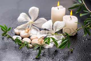 Beautiful spa still life of delicate white hibiscus, twig passionflower, stones with drops, candles on black background, closeup