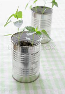 To tomme dåser brugt som blomsterkrukker