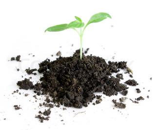 En lille grøn plante der spirer op ad en bunke jord