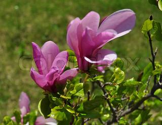 Billede af 'blomst, sommer, Sæson'