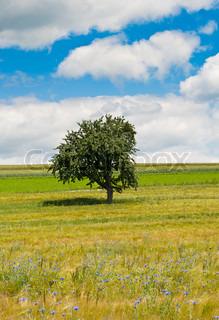 Billede af 'landbruget, landet, sommer'