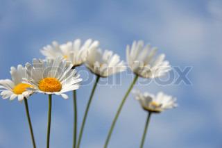 Billede af 'blomst, gult, scene'