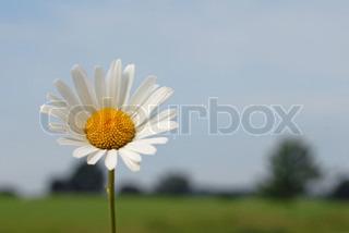 Billede af 'smuk, hvid, naturlig'