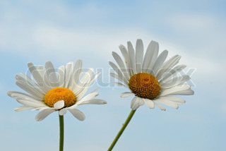 Billede af 'blomst, miljø, hvid'