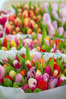 Billede af 'baggrund, plante, hollandsk'