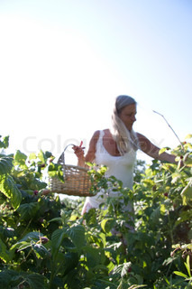 Blond girl with a basket picking berries