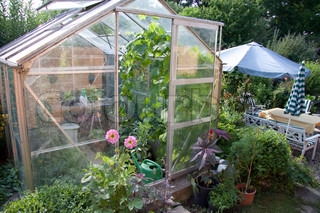 Greenhouse full of flowers and green plants