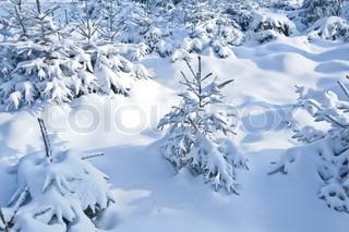 Billede af 'vinterlandskab, juletræ, juletræer'