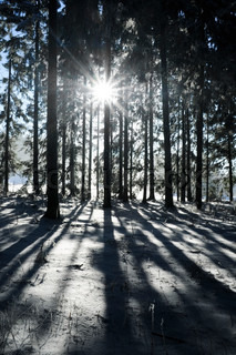 Image of 'winter, scandinavia, forest'