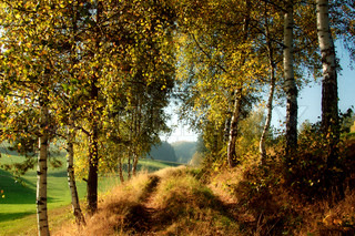 Image of 'fall, tranquil, woods'
