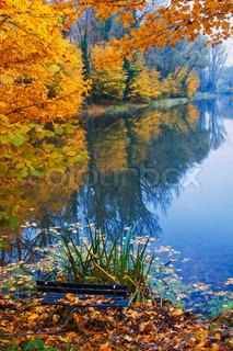 Billede af 'sø, skov, efteråret'
