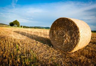 Billede af 'landbruget, sommer, eng'