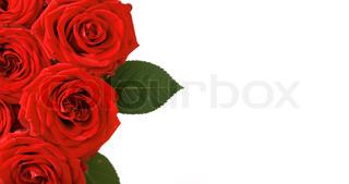 Et bundt røde roser