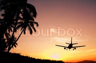 Et fly der letter ved solnedgang