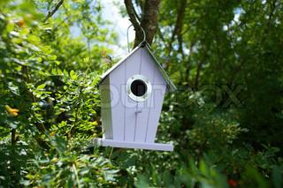 Fuglehus hænger i et træ på en sommerdag