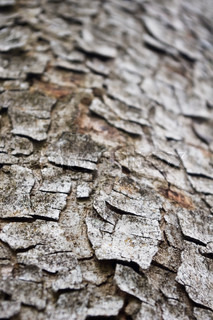 a abstract background of a tree bark texture