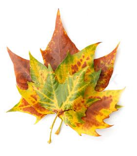 Billede af 'september, efteråret, løv'