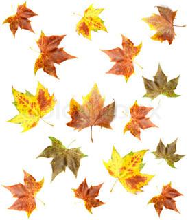 Billede af 'efterår, studie, baggrunde'