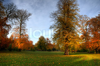 Billede af 'november, skov, efteråret'