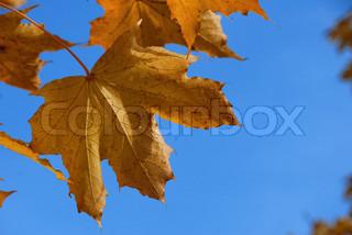 Billede af 'oktober, november, miljø'