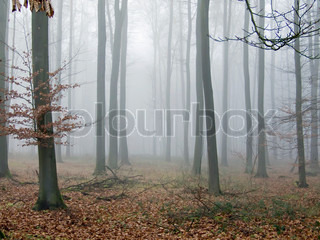 Foggy Autumn wood