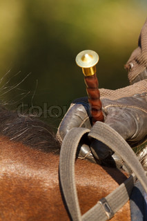 Horses whip close up