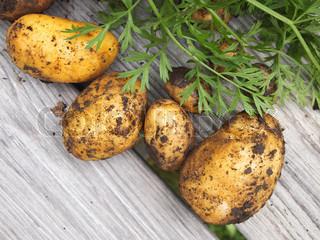 Bild von 'sonnenlicht, kartoffel, gartenbau'