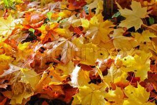 Billede af 'efteråret, baggrunde, autumn'