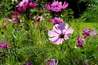 Billede af 'bloom, blomst, Sæson'