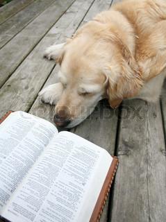 Billede af 'studere, læsende, hunde'