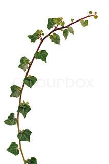 Billede af 'efterår, kvist, objekter'