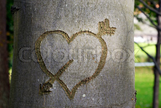 Heart shape in forrest tree