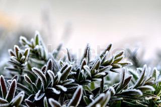 Billede af 'Vinter, closeup, haven'
