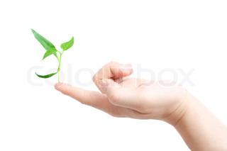 En plante der vokser på spidsen af en finger
