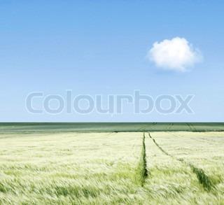 Billede af 'landbruget, sommer, natur'