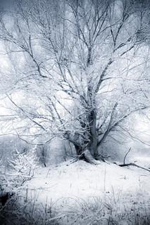 Billede af 'Branch, Park, Tree'