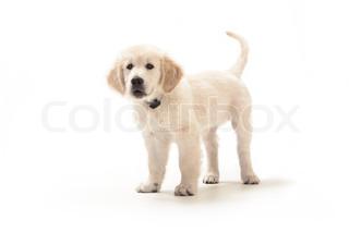 Billede af 'hvalpe, hunde, hund'