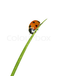 En mariehøne der kravler ned ad et blad