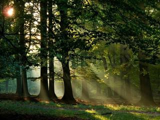 Billede af 'skov, sæsoner, scene'