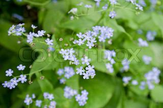 Billede af 'bloom, Sæson, plante'