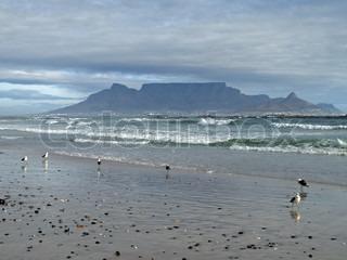 Image of 'shore, sea, flocks'