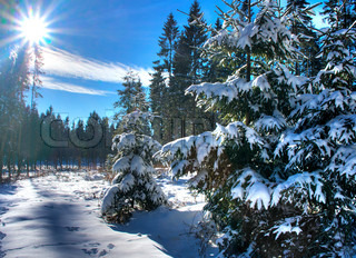 Image of 'christmas tree, sun, winter'