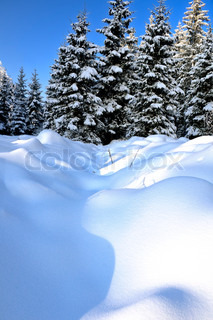 Image of 'landscape, winter, snow covered'